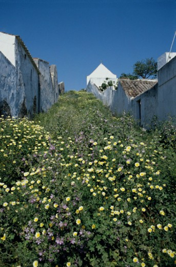 Stock Photo: 1598R-231953 Overgrown Alley in Portugal