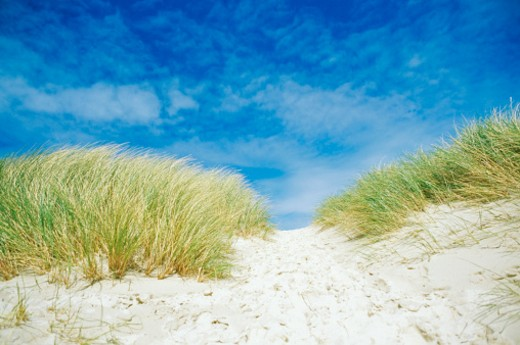 Ireland, Donegan, Grass on sand dune : Stock Photo