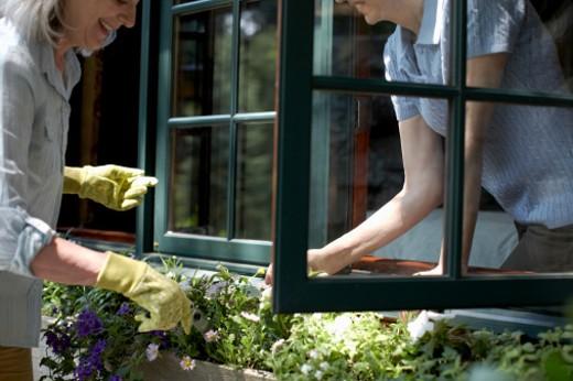Two women weeding flowers on window box : Stock Photo