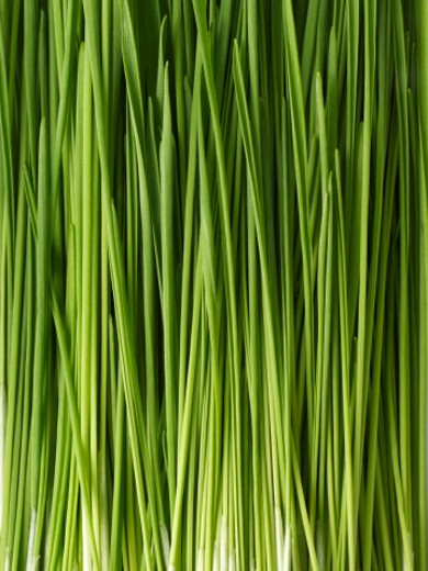 Stock Photo: 1598R-242442 Wheat grass, close-up, full frame