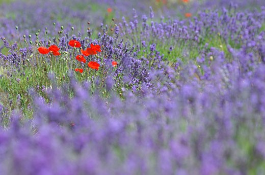 Stock Photo: 1598R-247379 France, Provence