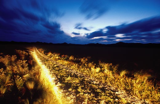 Illuminated Path in Field : Stock Photo