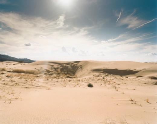 Stock Photo: 1598R-254513 Sand Dunes