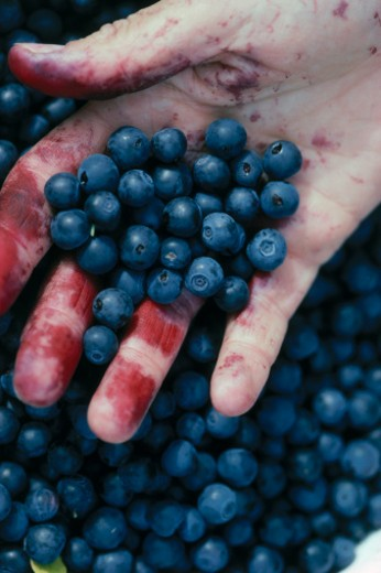 Stock Photo: 1598R-256461 Blueberries in Hand