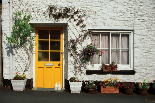 Stock Photo: 1598R-267334 Plants climbing up the wall of a house, Totnes, Devon, England