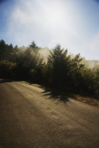 High angle view of a road in the wilderness, Mt. Tamalpais State Park, California, USA : Stock Photo