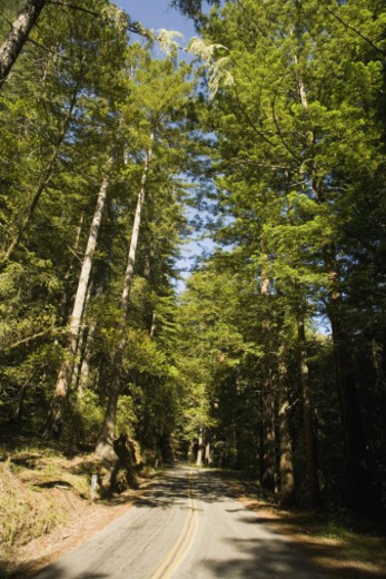 Stock Photo: 1598R-274200 High angle view of a road in the wilderness, Mt. Tamalpais State Park, California, USA