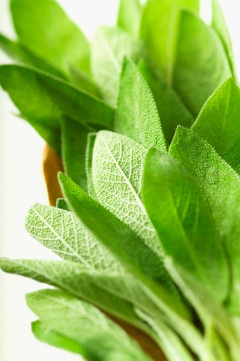 Stock Photo: 1598R-287886 Fresh sage leaves, close-up, part of, selective focus