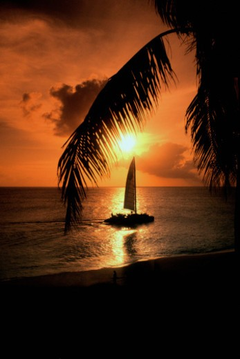 Silhouettes of palm tree fronds and sailboat at sunset in the Caribbean : Stock Photo