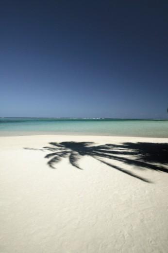 French Polynesia, Bora Bora, Motu Island, Palm tree shadow on a beach : Stock Photo