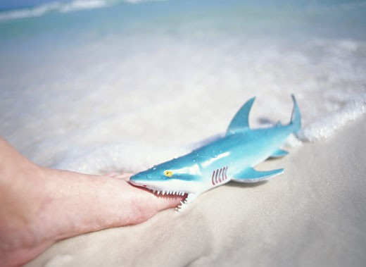 Plastic shark 'biting' person's foot, close-up : Stock Photo
