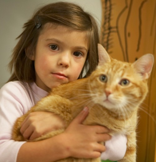 Stock Photo: 1598R-52772 Girl (5-7) holding cat, portrait (focus on girl)