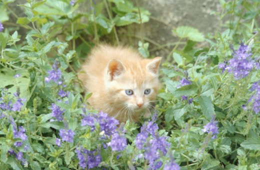 Kitten in flowers and garden plants : Stock Photo