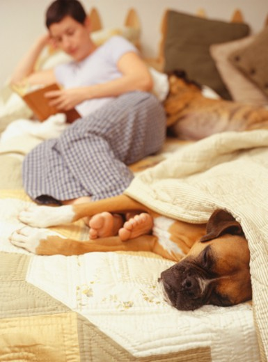 Young woman on bed with Boxer dog : Stock Photo
