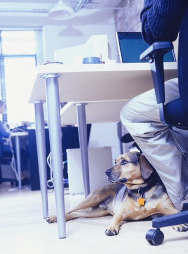 Owner with dog sitting at office : Stock Photo
