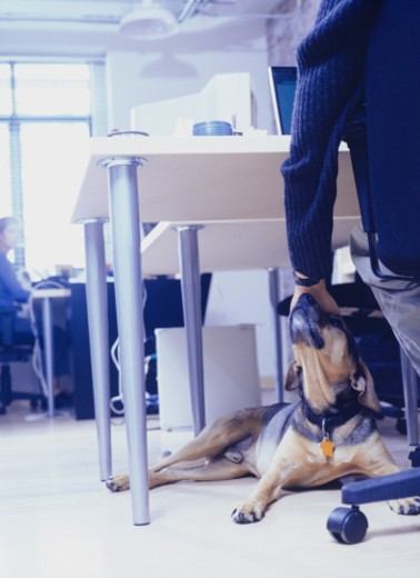 Stock Photo: 1598R-62042 Owner with dog sitting at office