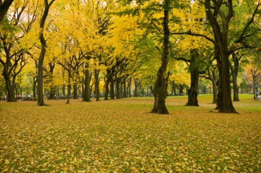 Stock Photo: 1598R-64819 Trees in park in autumn