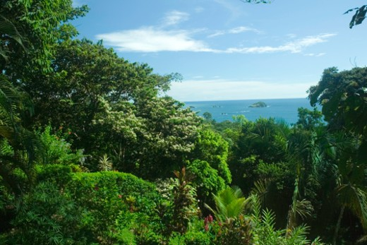Stock Photo: 1598R-65351 View of ocean through tropical vegetation, elevated view