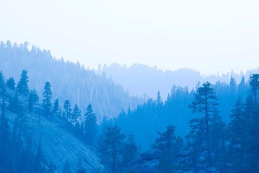 Stock Photo: 1598R-6898 Sequoia Forest, California, USA
