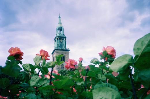 Roses Below a Church Spire in Berlin : Stock Photo