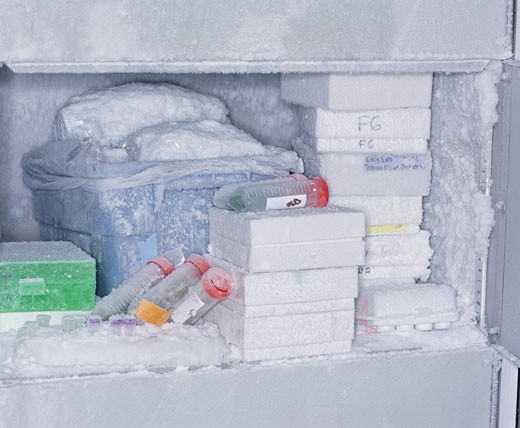 Freezer in laboratory containing samples : Stock Photo