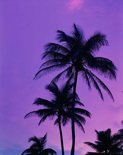 Stock Photo: 1598R-9101 Puerto Rico