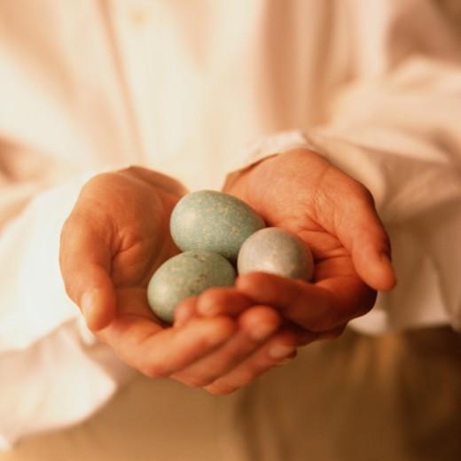 Holding Robin Eggs : Stock Photo