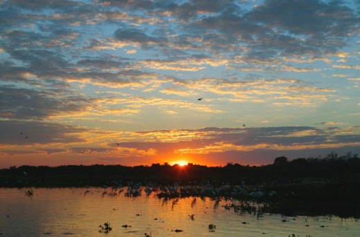 Brazil, Mato Grosso, Pantanal Wetlands, river at sunrise : Stock Photo