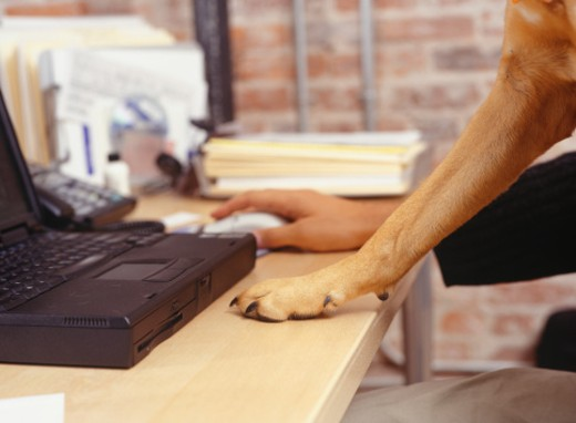 Stock Photo: 1598R-99299 Man working with laptop, dog's paw on desk, Close-up of hand and paw
