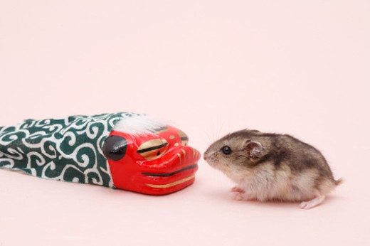 Stock Photo: 1598R-9939658 Dzhungarian hamster (Phodopus sungorus) next to toy dragon, studio shot