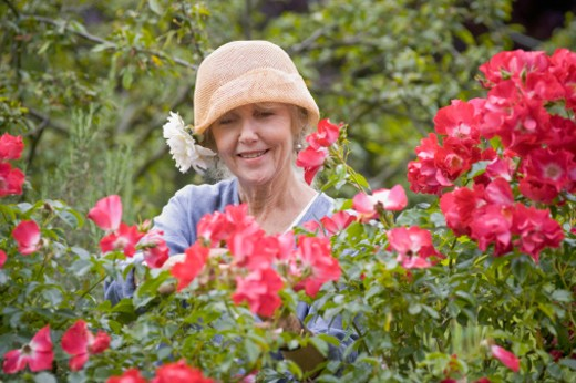 Stock Photo: 1598R-9940267 Senior woman gardening