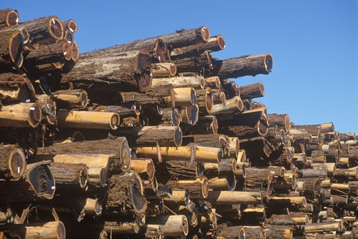 'A pile of logs tagged for processing at a lumber mill in Willits, California' : Stock Photo