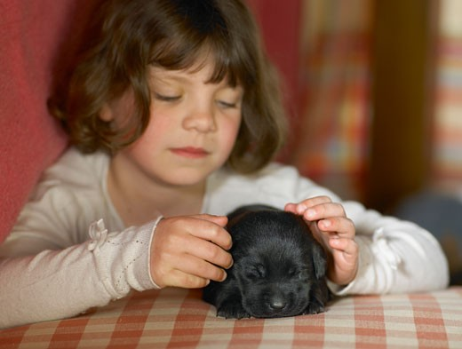 Stock Photo: 1598R-9947880 Girl (5-7) stroking back puppy