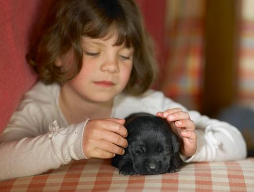 Girl (5-7) stroking back puppy : Stock Photo