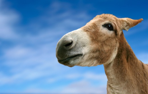 Portrait of a Donkey's Head on a Blue Sky : Stock Photo