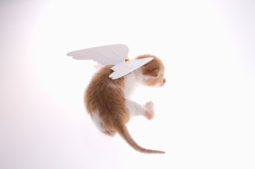 Kitten with angel wings attached to back, rear view : Stock Photo