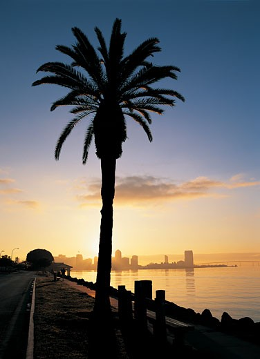 USA, California, San Diego, palm tree and waterfront, dusk : Stock Photo
