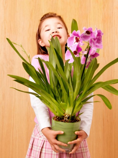 Girl (6-7 years) holding potted plant in front of panel wall, portrait : Stock Photo