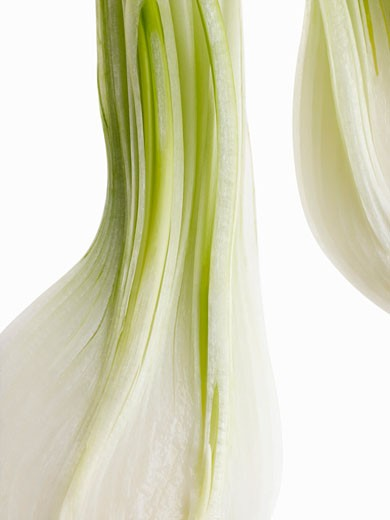 Two spring onions on white background, close up : Stock Photo