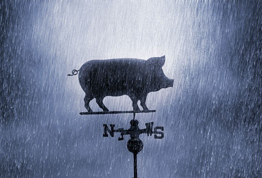 Pig Weathervane in the Rain : Stock Photo