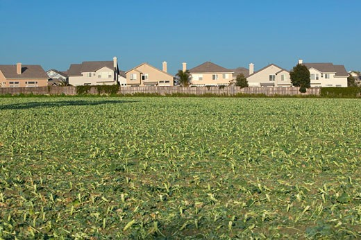 Stock Photo: 1598R-9974151 'Farmer's fields with crops by encroaching housing development subdivision in Santa Paula, CA'