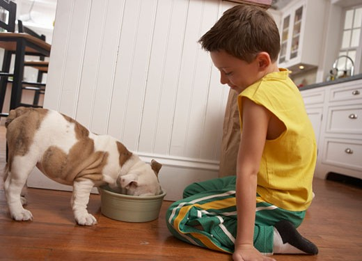 Young boy (6-8) looking at dog eat : Stock Photo