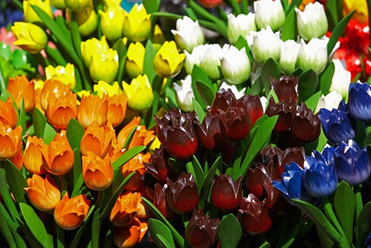Stock Photo: 1598R-9977019 Wooden tulips