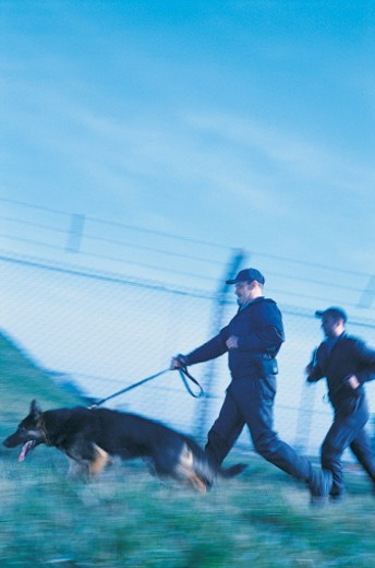 Stock Photo: 1598R-9977345 Security Guards Running with a Guard Dog on a Leash