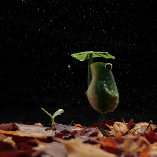 Frog with umbrella and bud on dead leaves : Stock Photo