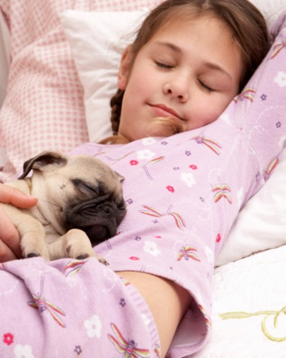 Stock Photo: 1598R-9981174 Girl (7-9) and pug puppy sleeping on bed, elevated view