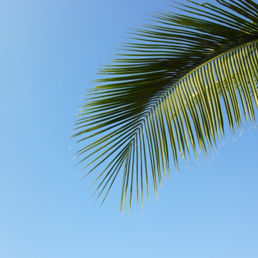 Palm leaves against blue sky : Stock Photo