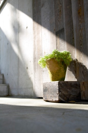 Stock Photo: 1598R-9983747 Potted plant on wood block in sunrays