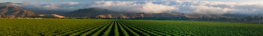 Stock Photo: 1598R-9989868 A wall of fog moving in off the Pacific Ocean pours over the town of San Juan Bautista and the Gabilan Range in San Benito County, California.