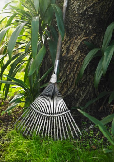 Garden rake leaning against tree : Stock Photo